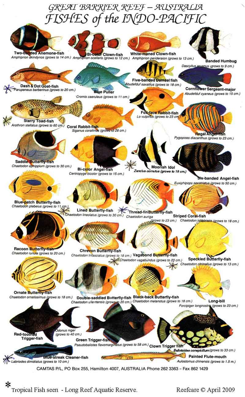 Tropical Fish Reefcare Long Reef